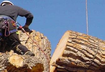 safe-tree-removal