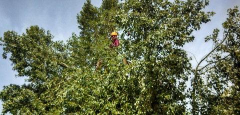 howard-in-autralian-bottle-tree