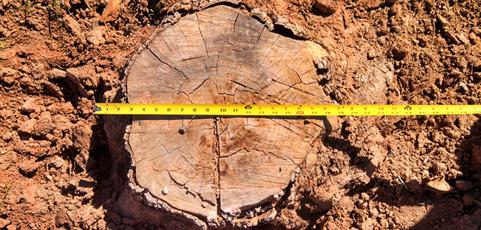 stump-grinding-002