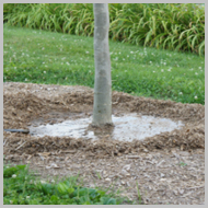 proper-tree-watering