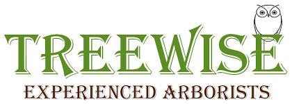 Tree Trimming Az | Tree Wise Experienced Arborists