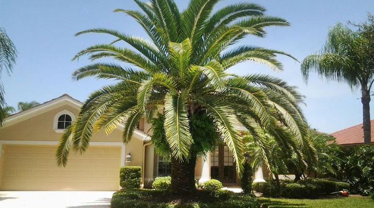 date-palm-image