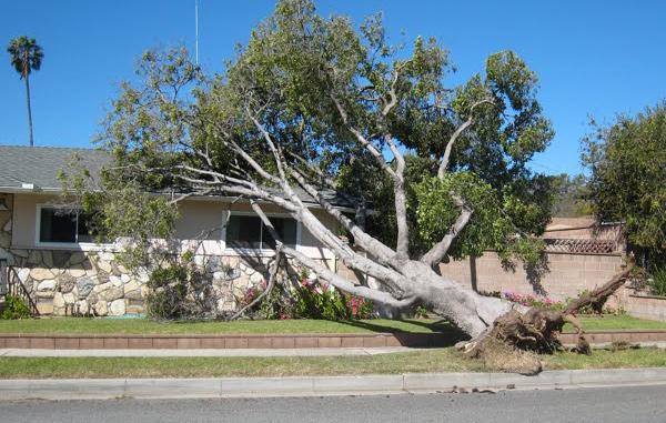 storm-damage-001